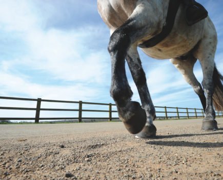 First Aid Week: What to do if your horse punctures the sole of his hoof