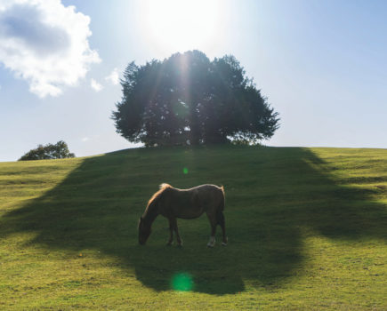 Rising number of horses abandoned due to Covid-19 are the landowner's responsibility, warns solicitor