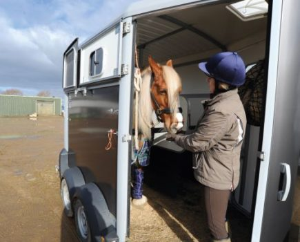 Buyer's guide to horse trailers