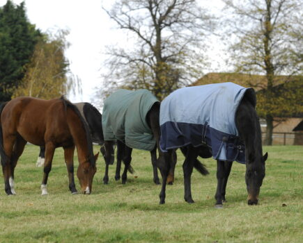 How to prepare for autumn with your horse