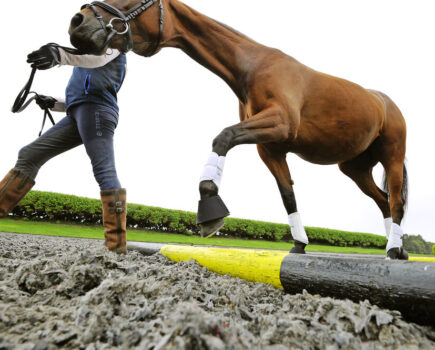 How to use in-hand polework to improve a horse's balance and self-carriage