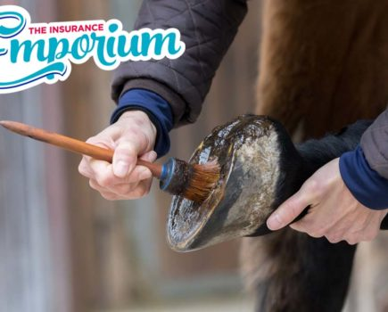 Laminitis: how to spot it, treat it and prevent it