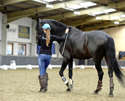 Teaching Your Horse to Leg-yield With Groundwork