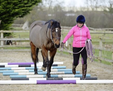 Improve Your Horse's Core With Two Easy in-hand Exercises