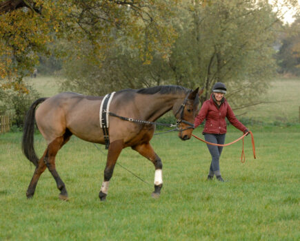 4 Ways to Improve Your Horse's Trot on the Lunge