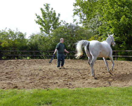 How to Canter Your Horse on the Lunge