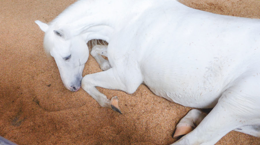 First Aid Week: How to assess a wound on your horse's body
