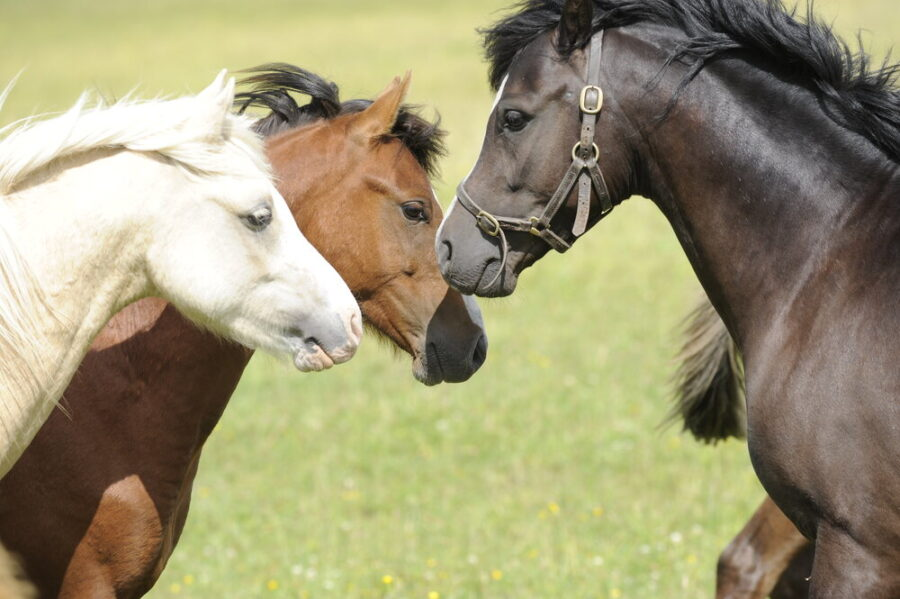 Introducing Your Horse to a New Herd