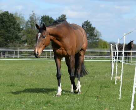 Make your horse fitter and healthier by using a track system in the field