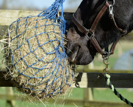 Hay or Haylage – Which Is the Best Forage for Your Horse?