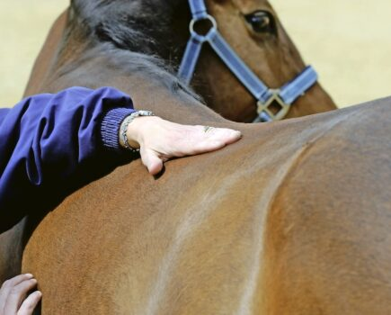 How Often Should Your Eventer Have a Massage? Our Expert Reveals All