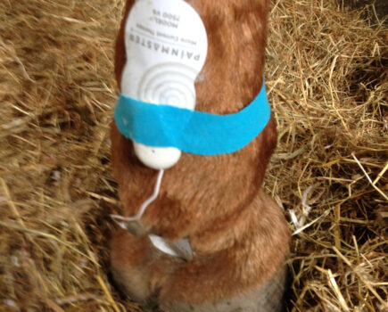 Microcurrent Therapy for Horses
