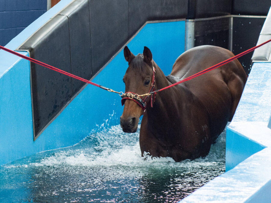 Will Hydrotherapy Benefit My Horse?