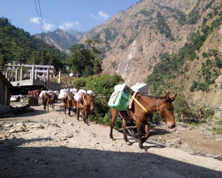 Liberating women, delivering life-saving aid and more: donkeys' vital role in disaster-hit countries is celebrated today