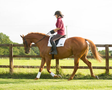 A Silent Scourge: Identifying and Treating Gastric Ulcers in Horses
