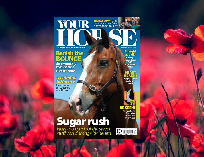 Inside the November Issue of Your Horse Magazine