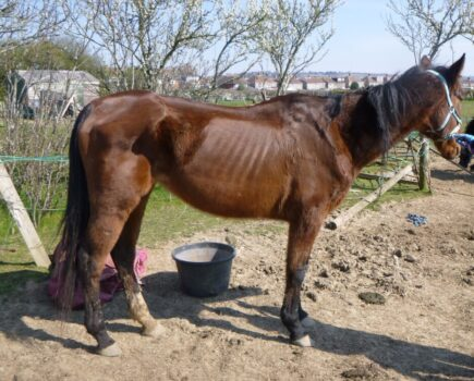 'It Is Never Acceptable to Leave an Animal to Suffer': Five Year Ban for Neglecting Horse