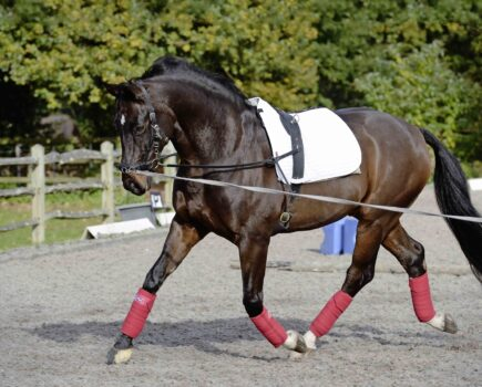 Top Tips for Effective Lungeing