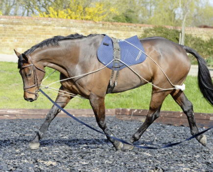 Perfect Your Horse's Topline With the Pessoa Training Aid