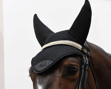 How a Fly Veil Could Aid Your Horse's Concentration