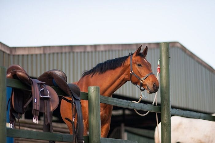 Spot signs of anxiety in your horse using the traffic light system and improve your bond