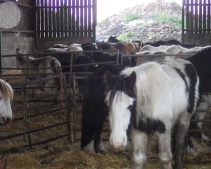 Man jailed following one of the UK's biggest animal rescue missions, which included more than 130 horses