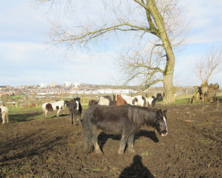 Owners of neglected horses banned for nine years and handed suspended jail term