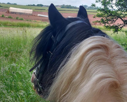 'I was a mess': fire brigade called to free cob mare who became stuck in sheep wire while out hacking