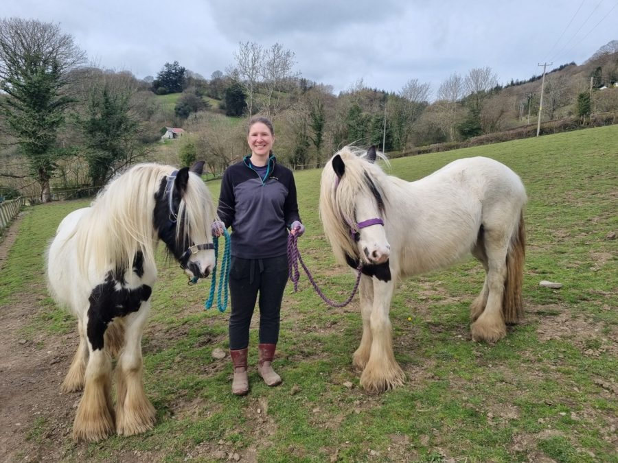 Eleven emaciated, sick ponies doing well one year after being rescued from flooded land