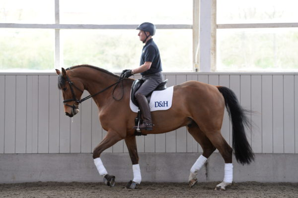 Richard Davison dressage masterclass: why and how you should ride your horse in different outlines *video*