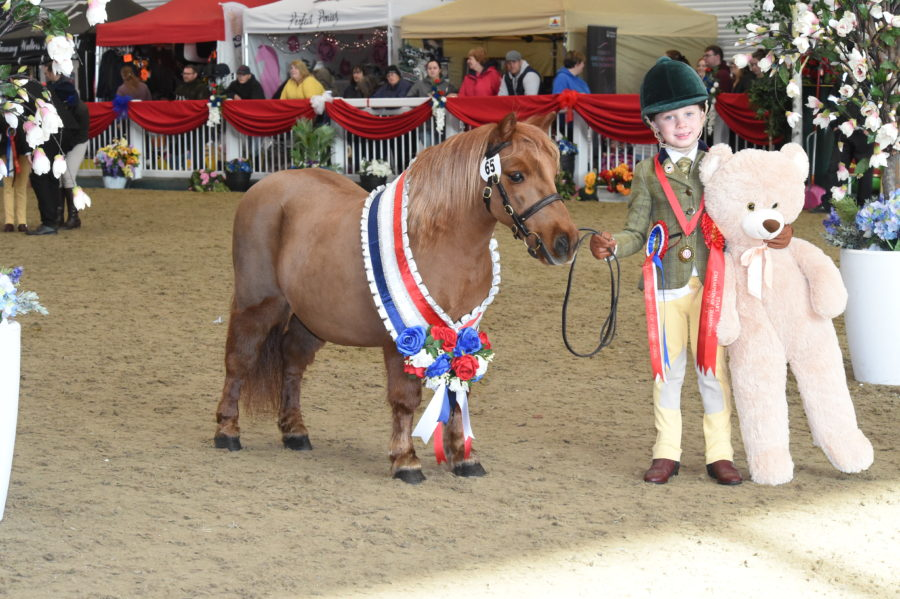 Showing championship for Riding and Pony club members attracts new title sponsor