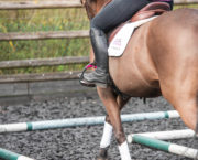 Lucinda Green: how to change your stirrup length between dressage, hacking and jumping *video*