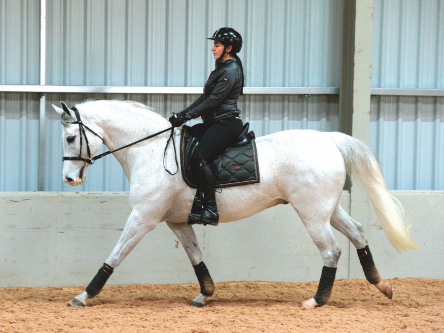 4 exercises to turn a lazy horse into an active horse