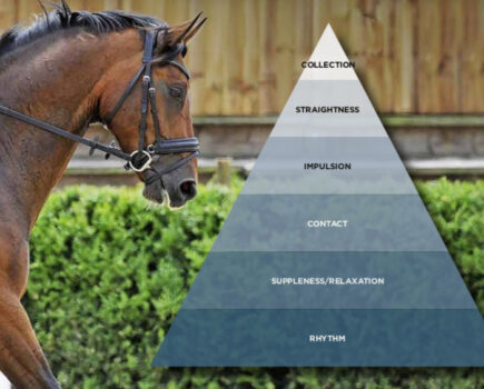 How the Scales of Training Can Improve Your Horse's Performance
