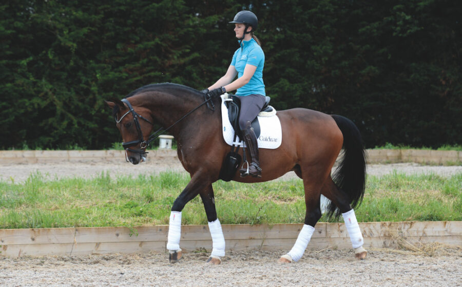 Why Winter Is the Time to Work on Your Horse's Walk — Plus Four Exercises to Try