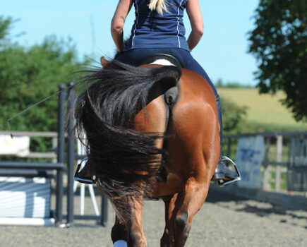 Three Simple Exercises to Work on Your Horse's Straightness