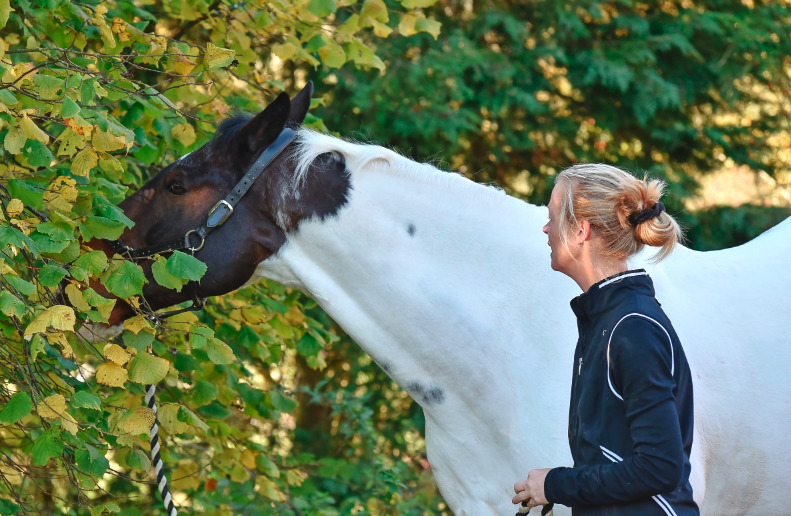 7 Ways to Enrich Your Horse's Environment and Make Him Happy