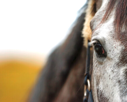 Why the Number of Times He Blinks Reveals a Lot About Your Horse