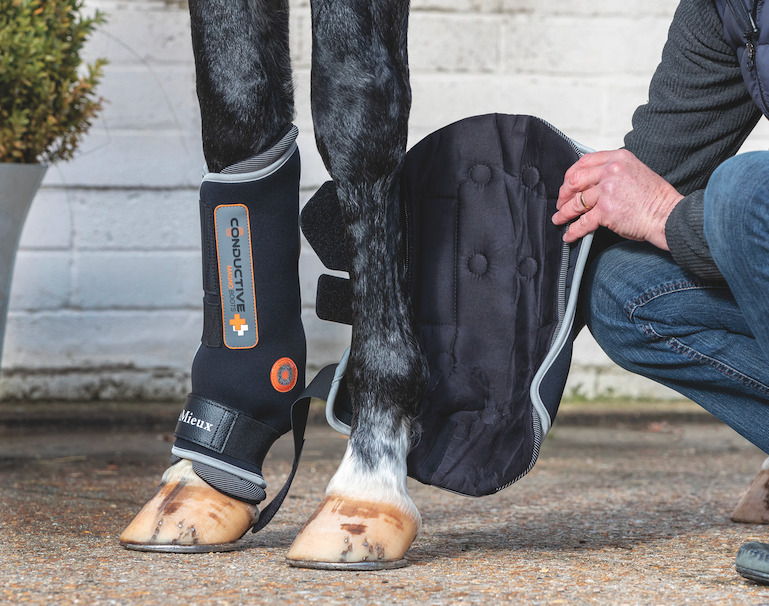 Magnetic Therapy: How It Can Help a Horse's Body Heal