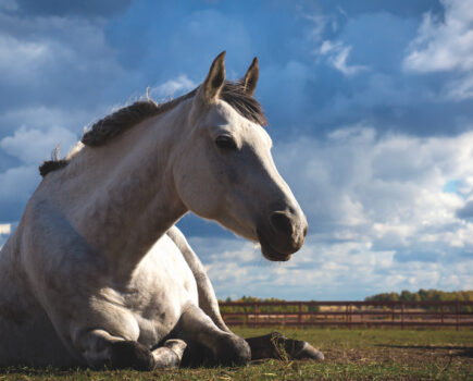 11 Reasons Horse Riders Are Excited for Spring