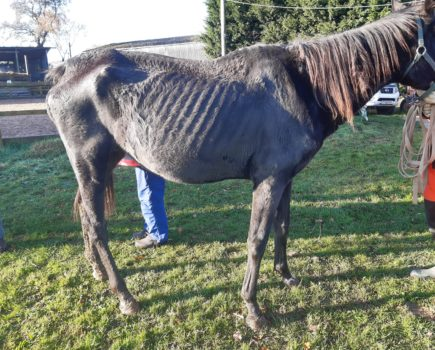 Life ban and suspended sentence for woman who caused six horses to suffer, leaving three dead