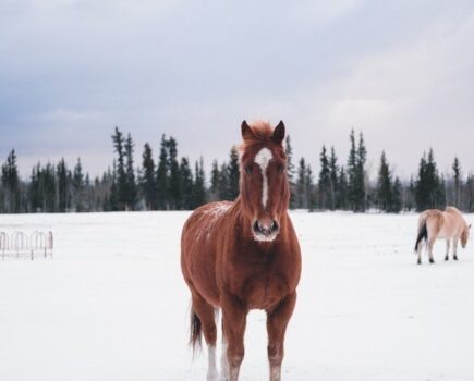 How Hay Is the Key to Keeping Your Horse Warm Without Piling on the Rugs This Winter