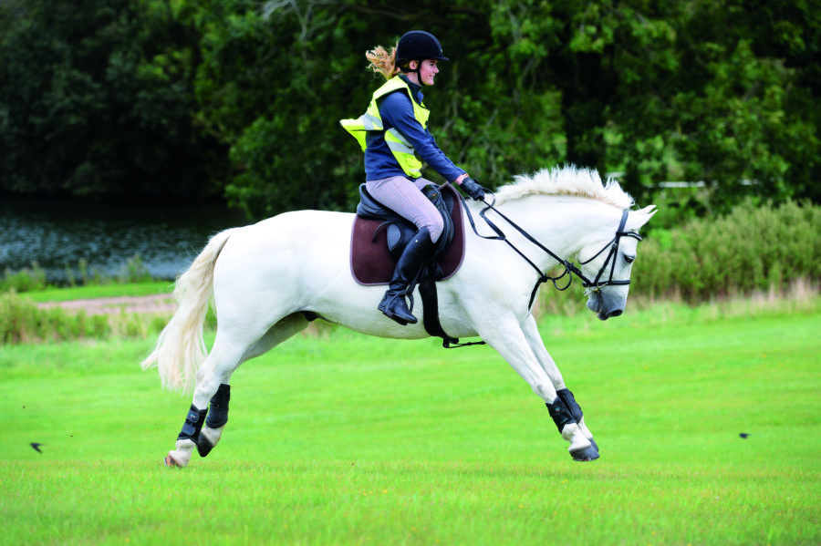 Spring fever: what it is and what you can do to help calm your horse down