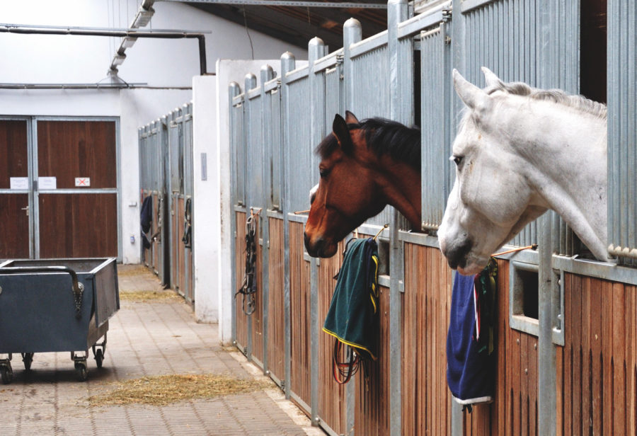 6 major obstacles owners face when managing their horse's weight — plus how to overcome them