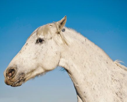 Tying-up: causes, signs, prevention tips and what to do if it happens to your horse