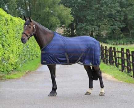 7 Coolers to Keep Your Horse Comfortable This Winter