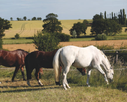 Strip grazing: why it's a great way to improve your horse's health and how it works