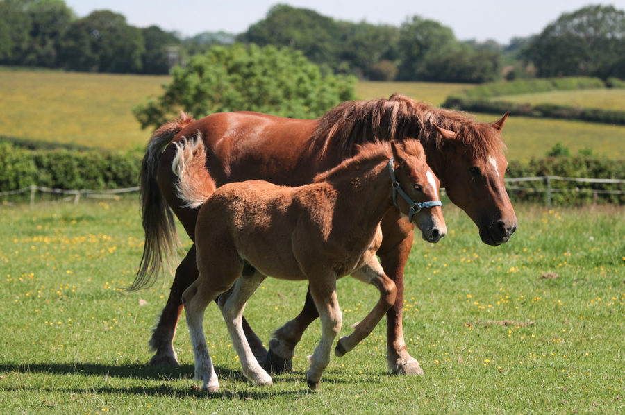 'His leg was swinging': foal with leg broken in multiple places receives life-saving treatment