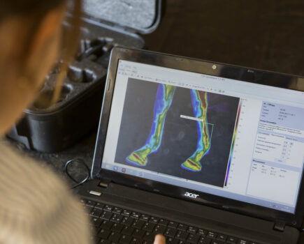 How Thermal Imaging Can Help Your Horse