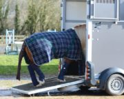 6 tail guards to prevent your horse rubbing his tail when travelling — and to help keep it clean